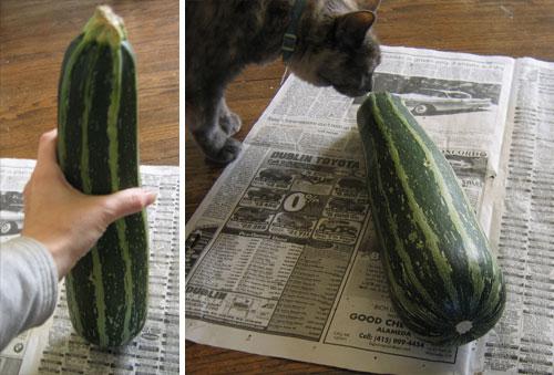 Infinate_zucchini